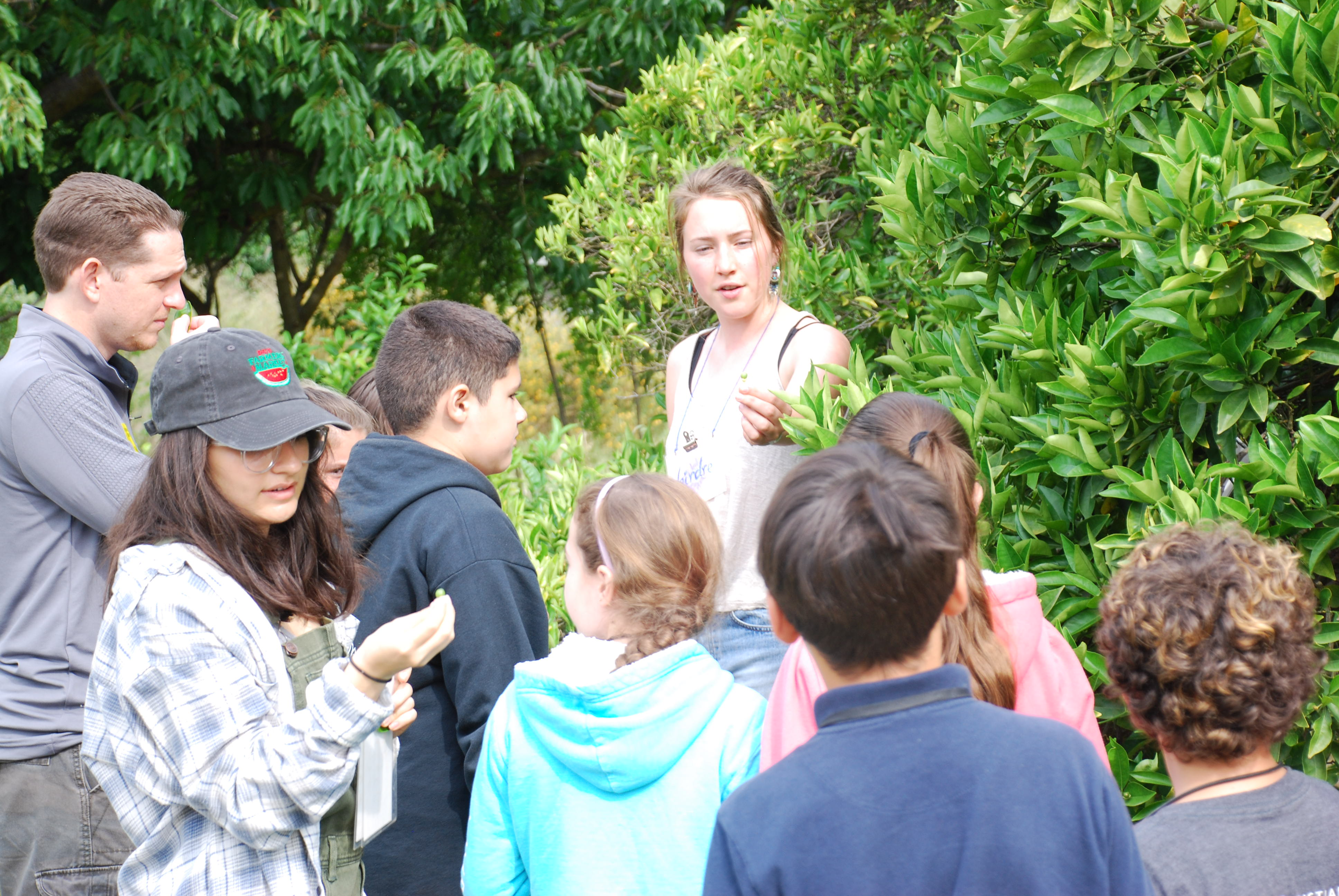 Learning about the fruit trees