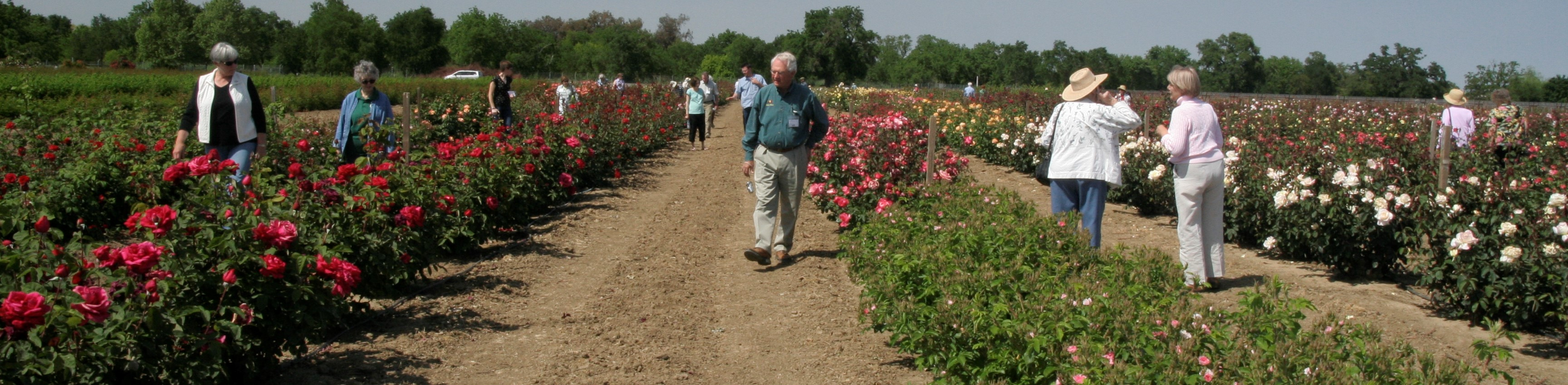 Rose Days | California Center for Urban Horticulture