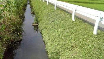 Water Canal Planting