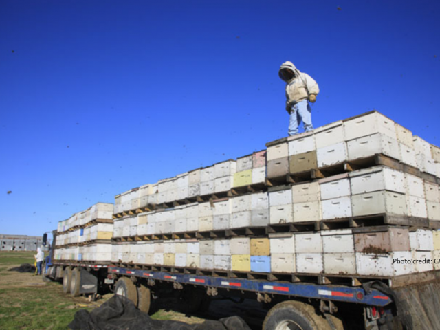 Bee Hives on truck bed; photo credit: CA DPR